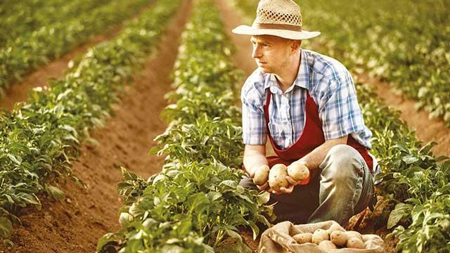 Çiftçi Kredileri